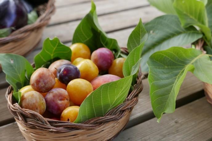 agriturismo in calabria_frutta biologica