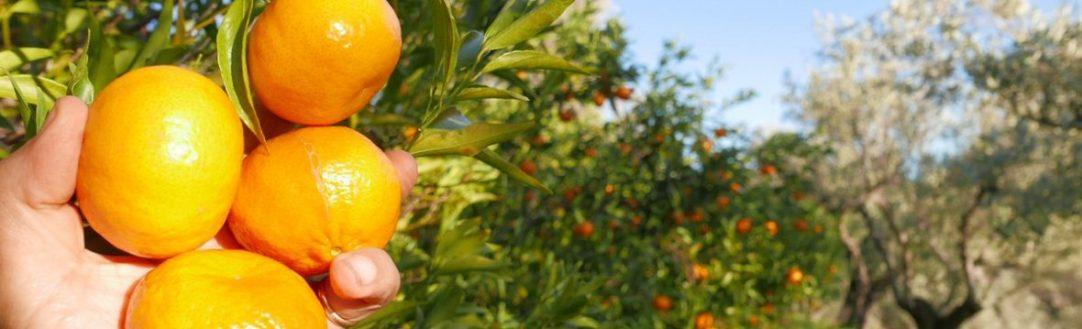 agriturismo_calabria_santacinnara_prodotti biologici