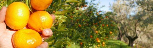 agriturismo_calabria_santacinnara_prodotti naturali