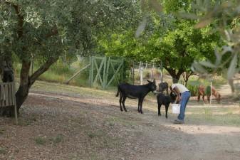 Agriturismo in Calabria_Santacinnara_fattoria biologica