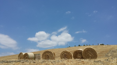 farmholidays in calabria_santacinnara_hills